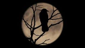 Πουλιά στον κλάδο με το μεγάλο φεγγάρι πίσω απόθεμα βίντεο