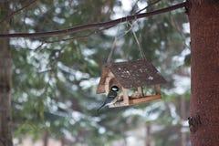 Πουλιά στον τροφοδότη πουλιών στο δάσος χειμερινού χιονιού Στοκ φωτογραφίες με δικαίωμα ελεύθερης χρήσης