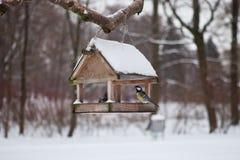 Πουλιά στον τροφοδότη πουλιών στο δάσος χειμερινού χιονιού Στοκ Εικόνα