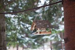 Πουλιά στον τροφοδότη πουλιών στο δάσος χειμερινού χιονιού Στοκ Φωτογραφίες