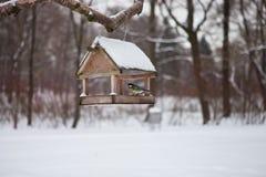 Πουλιά στον τροφοδότη πουλιών στο δάσος χειμερινού χιονιού Στοκ Εικόνες