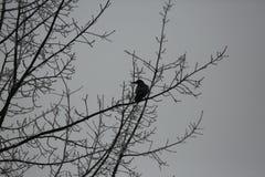 Πουλιά στους κλάδους ενός δέντρου το χειμώνα στοκ φωτογραφίες