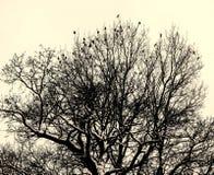 Πουλιά στο δέντρο Στοκ Φωτογραφία