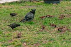 Πουλιά στο υπόβαθρο της πράσινης χλόης στοκ εικόνα