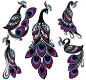 Πουλιά φαντασίας σχεδίων Peacock Συλλογή Peacocks απεικόνιση αποθεμάτων