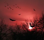 Πουλιά Στοκ φωτογραφία με δικαίωμα ελεύθερης χρήσης