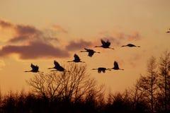 πουλιά στοκ εικόνα με δικαίωμα ελεύθερης χρήσης