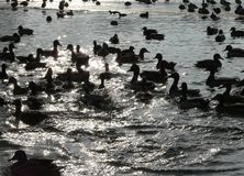 πουλιά contrejour Στοκ εικόνα με δικαίωμα ελεύθερης χρήσης