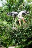 πουλιά jugle Στοκ φωτογραφίες με δικαίωμα ελεύθερης χρήσης