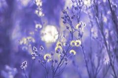 Πουπουλένια wildflowers στο φως αυγής ` s στοκ φωτογραφίες