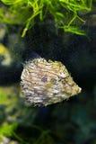 Πουπουλένιο filefish Στοκ εικόνα με δικαίωμα ελεύθερης χρήσης