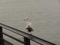 πουλί απομονωμένο Στοκ φωτογραφίες με δικαίωμα ελεύθερης χρήσης
