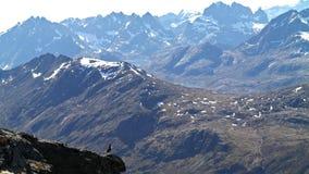 Πουλί βουνών Στοκ φωτογραφία με δικαίωμα ελεύθερης χρήσης
