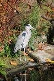 Πουλί γερανών Στοκ φωτογραφία με δικαίωμα ελεύθερης χρήσης