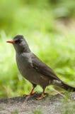 πουλί εξωτικό Στοκ φωτογραφία με δικαίωμα ελεύθερης χρήσης