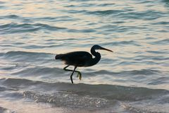 Πουλί θάλασσας Στοκ εικόνες με δικαίωμα ελεύθερης χρήσης