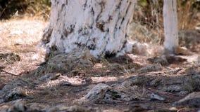 Πουλί και δάσος φιλμ μικρού μήκους