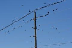 Πουλί και ηλεκτροφόρα καλώδια Στοκ φωτογραφία με δικαίωμα ελεύθερης χρήσης