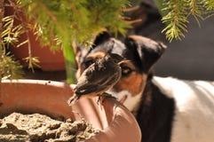 Πουλί και σκυλί Στοκ φωτογραφία με δικαίωμα ελεύθερης χρήσης