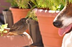 Πουλί και σκυλί Στοκ εικόνα με δικαίωμα ελεύθερης χρήσης