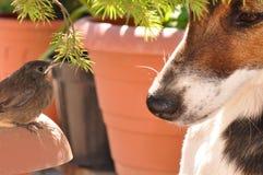 Πουλί και σκυλί Στοκ φωτογραφίες με δικαίωμα ελεύθερης χρήσης