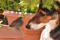 Πουλί και σκυλί Στοκ Εικόνα