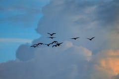 Πουλί και σύννεφο Στοκ εικόνα με δικαίωμα ελεύθερης χρήσης