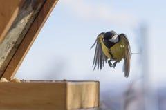 Πουλί κατά την πτήση Στοκ φωτογραφία με δικαίωμα ελεύθερης χρήσης