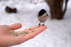 Πουλί με τα γκρίζα γραπτά φτερά στοκ φωτογραφία