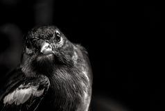 πουλί μικρό Στοκ εικόνες με δικαίωμα ελεύθερης χρήσης