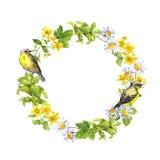 Πουλί, λουλούδια λιβαδιών Floral στεφάνι Σύνορα κύκλων Watercolor Στοκ εικόνες με δικαίωμα ελεύθερης χρήσης