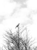 Πουλί πάνω από ένα δέντρο Στοκ Εικόνες