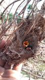 πουλί πεινασμένο Στοκ εικόνες με δικαίωμα ελεύθερης χρήσης