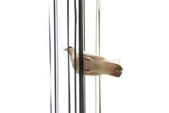 Πουλί περιστεριών Στοκ Φωτογραφία