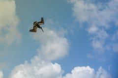 Πουλί πελεκάνων Στοκ Φωτογραφίες
