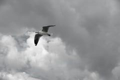 Πουλί που γλιστρά στο μπλε ουρανό Στοκ εικόνα με δικαίωμα ελεύθερης χρήσης