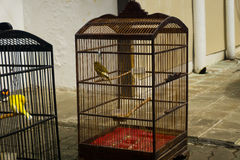 Πουλί που κάνει ηλιοθεραπεία στο κλουβί τη φωτογραφία τροφίμων και ποτών που λαμβάνεται με στην Τζακάρτα Ινδονησία Στοκ Εικόνες
