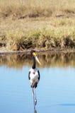Πουλί που περπατά σε μια λίμνη Στοκ Φωτογραφίες
