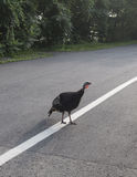 Πουλί που περπατά στην οδό το καλοκαίρι στοκ εικόνα