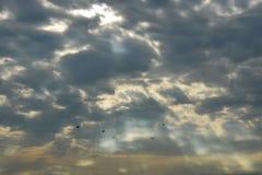 Πουλί που πετά για τη διαβίωση το πρωί στο υπόβαθρο ανατολής Στοκ εικόνα με δικαίωμα ελεύθερης χρήσης