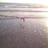 Πουλί που πετά πέρα από τον ωκεανό στο σύνολο ήλιων Στοκ Εικόνα