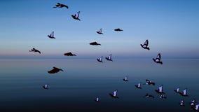 Πουλί που πετά πέρα από το υπόβαθρο ζωτικότητας θάλασσας φιλμ μικρού μήκους