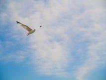 Πουλί που πετά στο μπλε ουρανό Στοκ Εικόνες