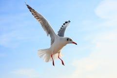 Πουλί που πετά στο μπλε ουρανό, Στοκ φωτογραφία με δικαίωμα ελεύθερης χρήσης
