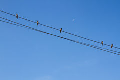 Πουλί που σκαρφαλώνει στο ηλεκτρικό καλώδιο στο υπόβαθρο μπλε ουρανού Στοκ Φωτογραφία