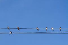 Πουλί που σκαρφαλώνει στο ηλεκτρικό καλώδιο στο υπόβαθρο μπλε ουρανού Στοκ εικόνα με δικαίωμα ελεύθερης χρήσης