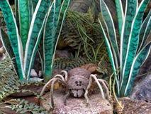 πουλί που τρώει την αράχνη στοκ εικόνες