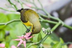 Πουλί που τρώει το λουλούδι Στοκ Εικόνα