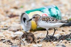 Πουλί που φαίνεται τρόφιμα στα σκουπίδια στοκ φωτογραφία
