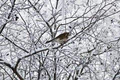 Πουλί σε έναν κλάδο δέντρων στο χιόνι Στοκ Εικόνες